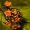 Virágok másképp 3