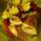 Virágok másképp 4