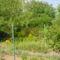 Nyári körkép kertünkből 17