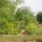 Nyári körkép kertünkből 20