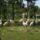 Rozsas_flamingok-001_1712144_2742_t