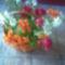 Virágaim.