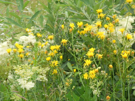Erdei virágos kert