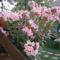 Nyári virágaim. 4