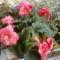 Nyári virágaim. 8