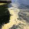 Óriási adagokban szórták a virágport a fenyők, a juharfák és a tölgyek a nyár elejéig - Ártatlan virágpor színezte sárgára a Sebago-tó vizét az Egyesült Államokban