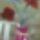 Szijártó Renáta virágai