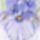 Akvarell_5_1718882_1036_t
