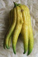 buddha keze