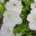 Katalin virágai