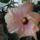 Lusta_classik_pink_1071665_9116_t