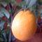 narancs közelről