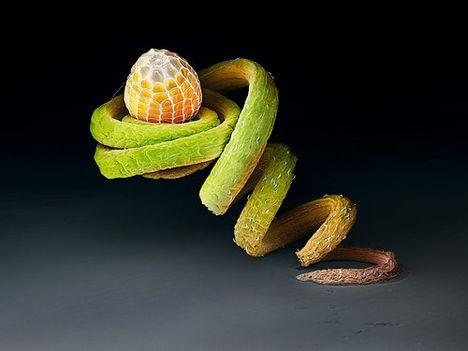 Pillangó lárva