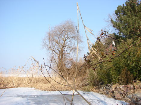 Tavasz-Balaton, március 5.-én. 14