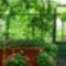 virágaim földvár 1