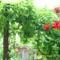 virágok és festményeim 002