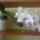 Orchideam-001_1721788_9261_t
