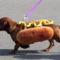 HOT-DOG-1374