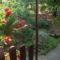 2013 kertem rózsái 022