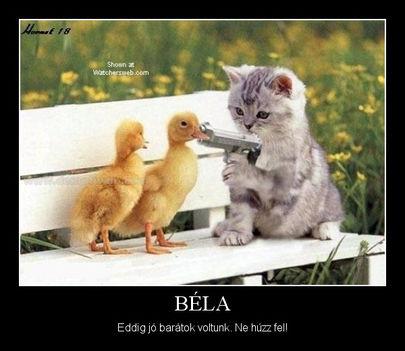 Béla! Eddig jó barátok voltunk. Ne húzz fel!