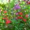 Nebáncs virág