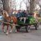 2011 03 FARS 560 vag