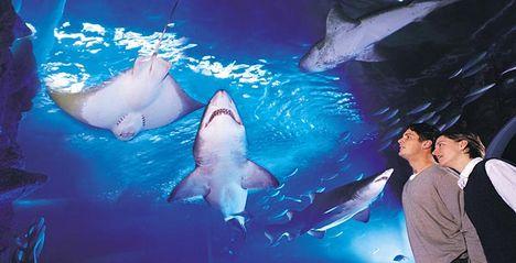 A híres Melbourne-i Aquariumban