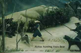 akita anno 2