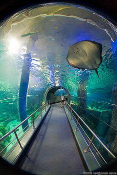 Az Aquariumban