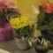 cicamica 10  nőnapi virágaim