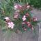 Cicamica virágai 2012-13 18  leander