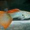 halak kép 11