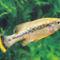 halak kép 15