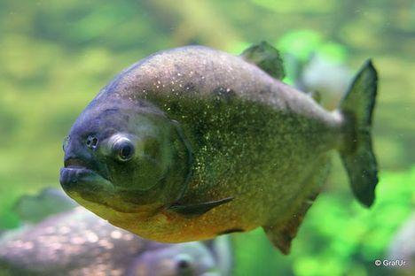 halak kép 2