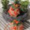 Kócos mohagömb polifoam virággal