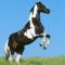 lovas kép 12