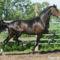 lovas kép 16