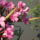 AZ ÉLET KERTJE VII.: virág és virágoskert