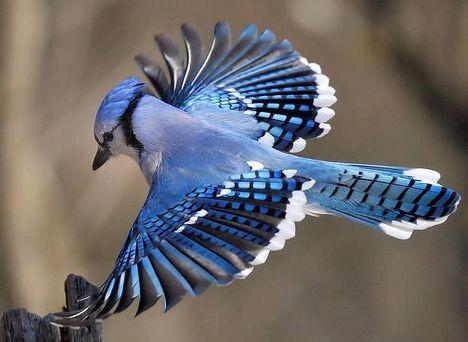 Repűl a kék madár................?