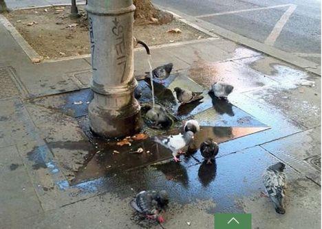 galamb zuhany Rómában