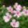 Bérces Éva növényei
