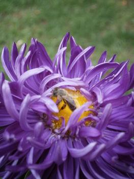 Még a méhecskének is tetszik.