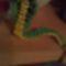Kígyó