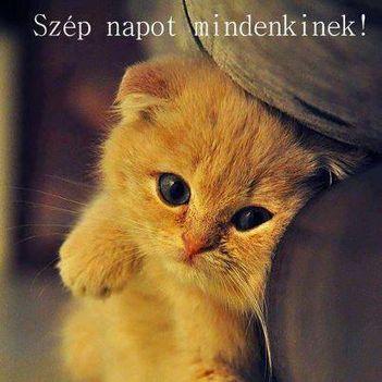 Ébredő  cica