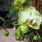 feleségem orhideái 1 DSCF0094