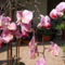 feleségem orhideái 3 DSCF0098