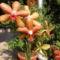 feleségem orhideái 4 DSCF0104