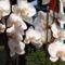feleségem orhideái 8 DSCF0118