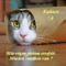 Kukucskáló cica