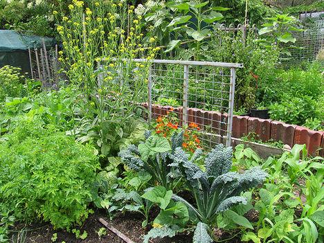 permakultúrás kertészkedés népszerűsítése